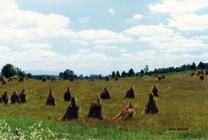 Wheat Shocks by Joan Russell